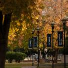Fall trees on campus with light poles